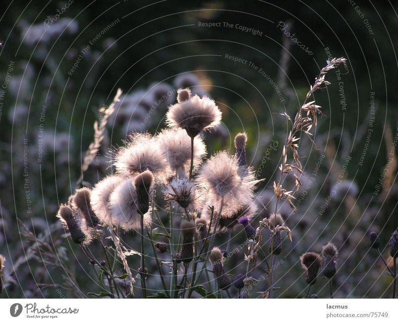 sunbath Blume Gras Blüte Blumenstrauß Wiese schön Sommer Natur