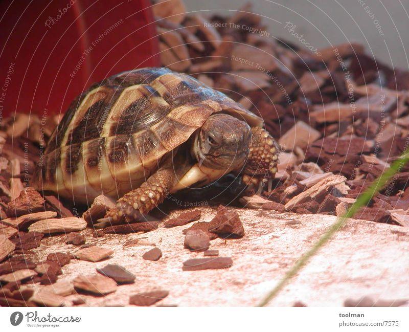Schildkröte Tier Natur gepanzert