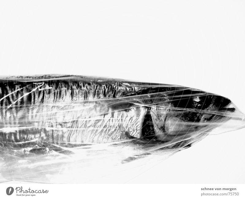 kein wasser (s/w) Makrele Tod Meer vergangen Kieme schwarz weiß grau glänzend leer Lebensmittel Ernährung Natur fish Wasser water sea death Auge black white