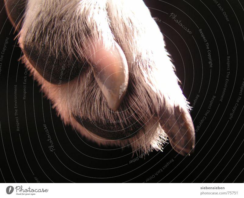 gestatten Hund Pfote Krallen Nagel Fell Tier schwarz weiß Nahaufnahme Lebewesen weich außergewöhnlich Mischling Säugetier Makroaufnahme vierbeiner haustie