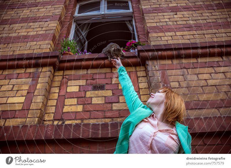 Die Katze auf der Fensterbank Mensch Frau Pflanze rot Blume Haus Tier Erwachsene Wand feminin Mauer Blüte natürlich Glück Freundschaft