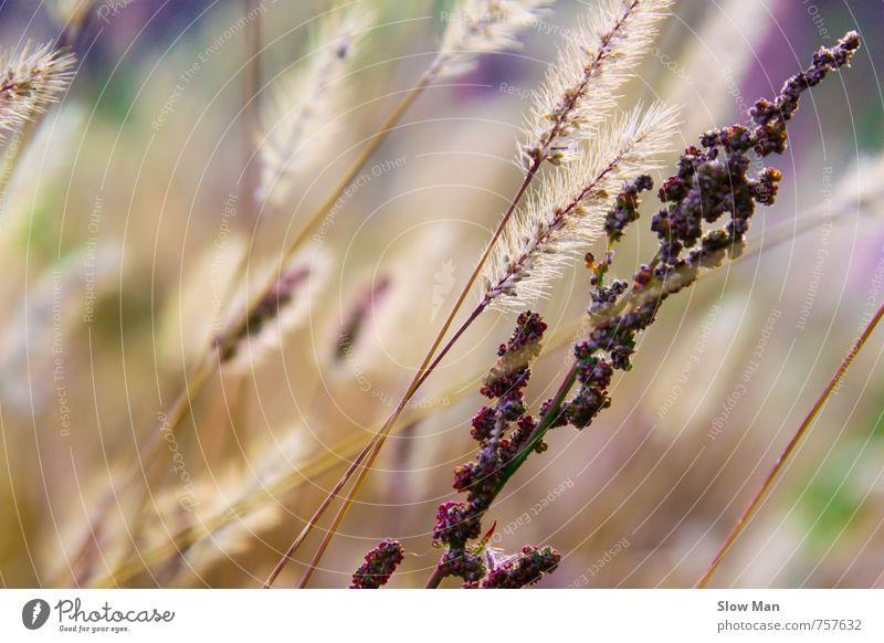 flower art Umwelt Natur Landschaft Pflanze Sommer Schönes Wetter Gras Wärme violett Wiese schön Frühling Farbfoto Außenaufnahme Nahaufnahme Textfreiraum links