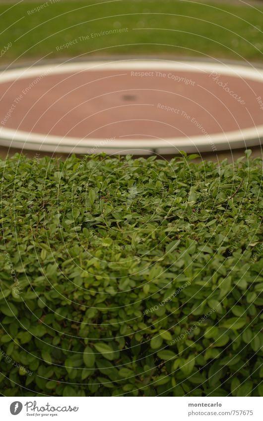 Eingelocht [300] Natur grün Pflanze Sommer rot Umwelt Wiese Gras Spielen natürlich Stein Garten Park Sträucher Beton Schönes Wetter