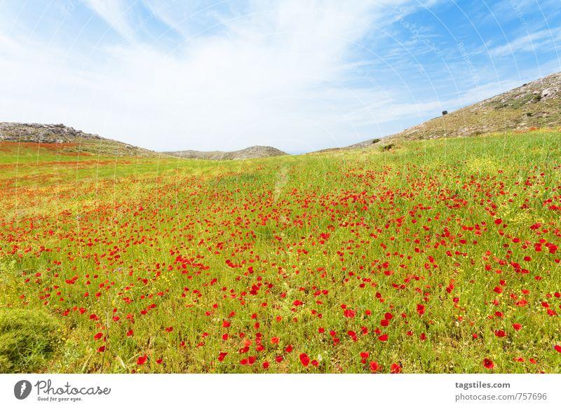 MOHNWIESEN VON PREVELI Natur Ferien & Urlaub & Reisen Pflanze Sommer Erholung Blume Landschaft ruhig Berge u. Gebirge Frühling Reisefotografie Blüte natürlich