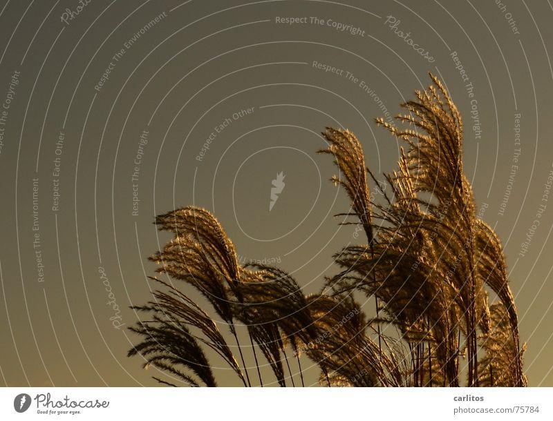 Windspiel Himmel Herbst Gras Spielen Schrebergarten Richtung wehen Biegung Kompost Fehlfarbe Feng Shui