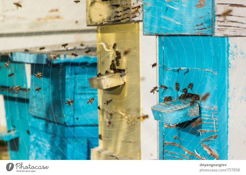 Bienenschwarm fliegt zum Bienenstock Freizeit & Hobby Sommer Haus Garten Natur Tier Gras Wiese Schwarm modern natürlich grün Liebling Bienenkorb Imkerei Wabe