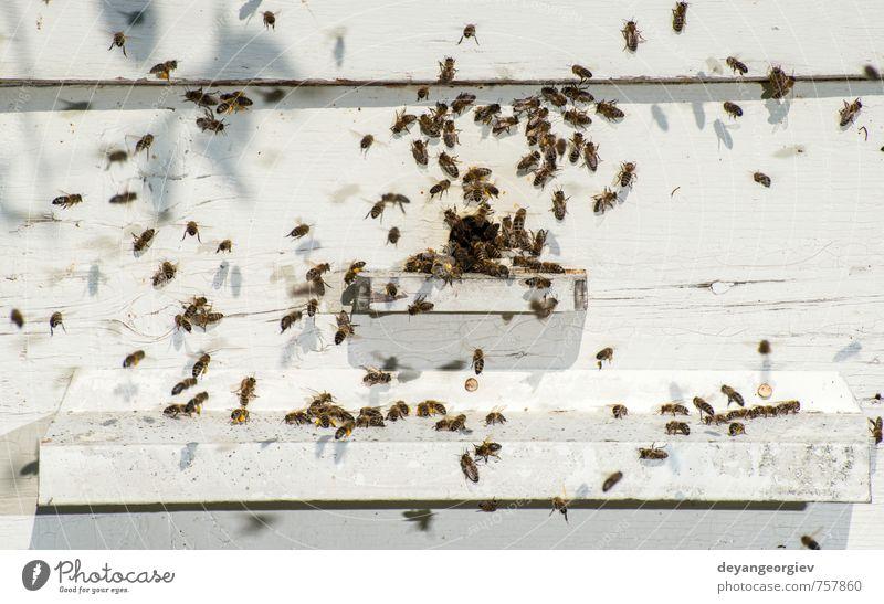 Bienen, die in den Bienenstock gelangen. Sommer Arbeit & Erwerbstätigkeit Umwelt Natur Tier Schwarm natürlich blau Bienenkorb Imkerei Bienenzucht Liebling