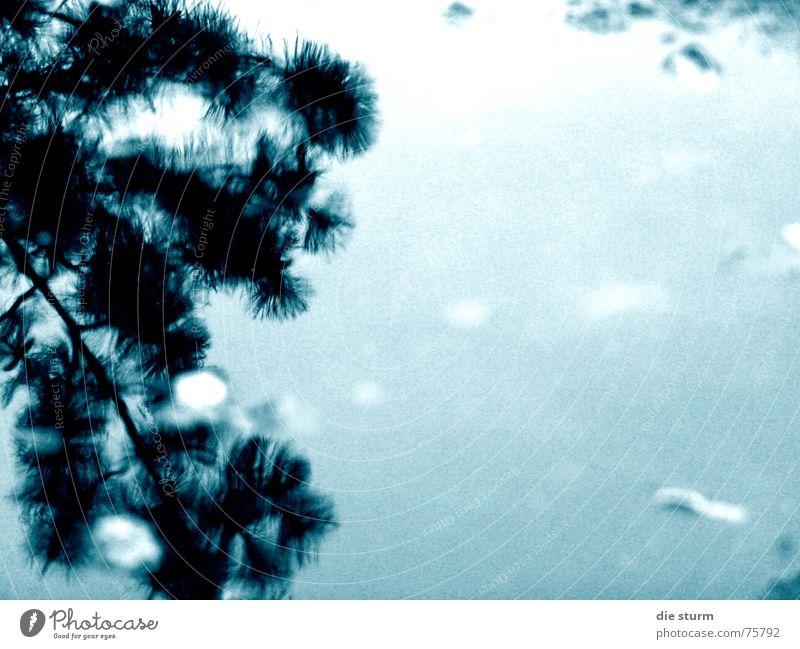 Spiegelung in der Pfütze Wasser Pflanze Blatt Regen Ast Surrealismus schlechtes Wetter
