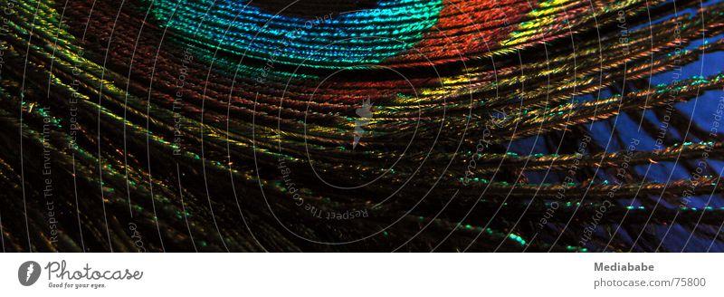 die halbe Feder Pfauenfeder grün glänzend fein Auge blau orange Stolz Makroaufnahme