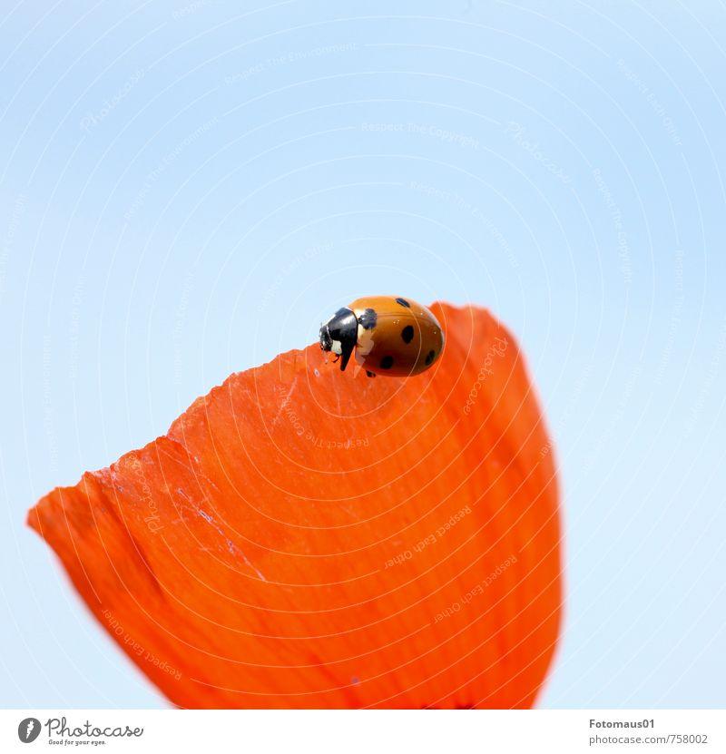 sonniges Plätzchen - Siesta I Himmel Natur blau Pflanze Sommer Erholung ruhig Tier Frühling Blüte Glück Stimmung träumen orange Zufriedenheit Wildtier