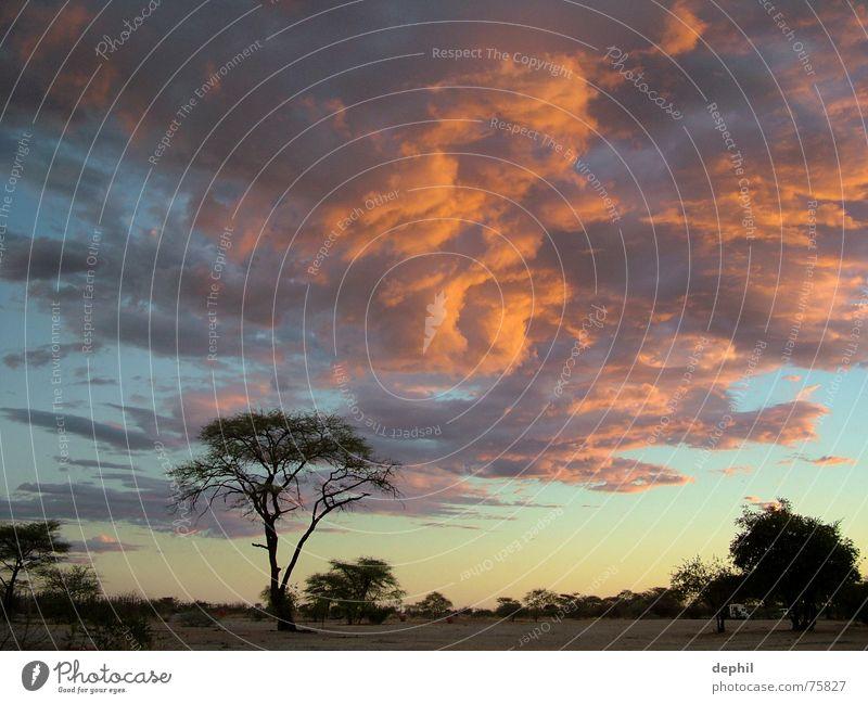 burning sky Dämmerung Sonnenuntergang Wolken Steppe Baum Afrika Namibia Etoscha-Pfanne Ferien & Urlaub & Reisen Süden Abend Himmel Landschaft