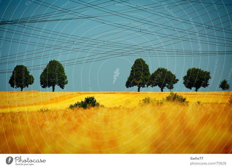 Spidy was here Feld Baum Leitung Elektrizität chaotisch durcheinander Horizont Himmel Kontrast Kabel gewebt