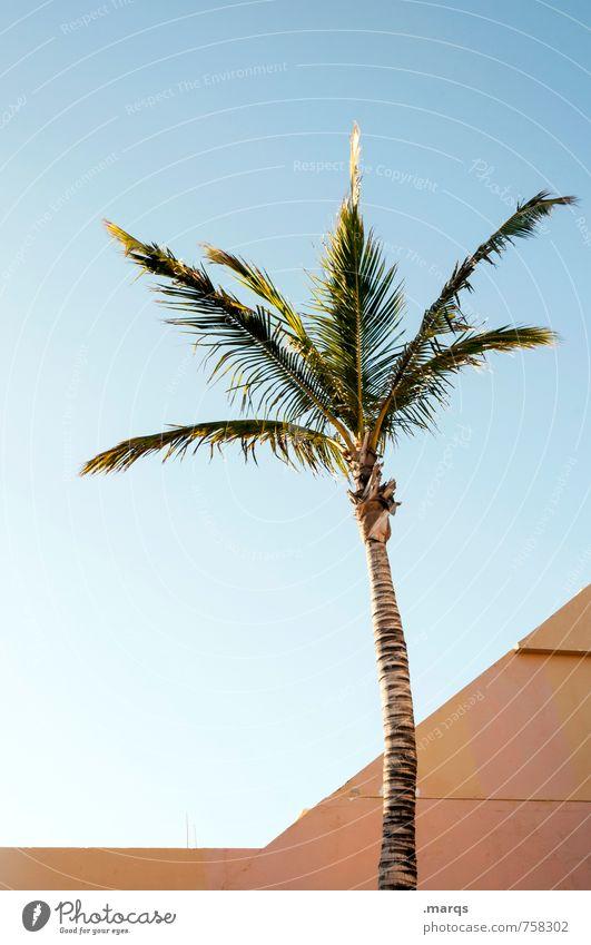 Palme Ferien & Urlaub & Reisen Ferne Wolkenloser Himmel Pflanze exotisch Architektur einfach hell schön Stimmung ästhetisch Erholung Farbfoto Außenaufnahme