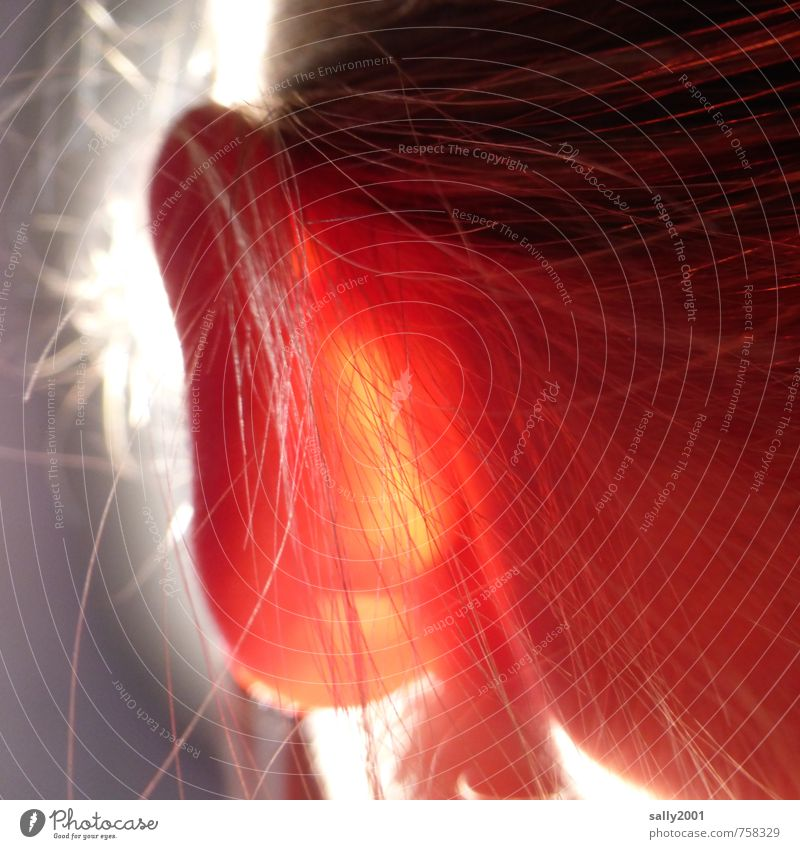 Ohrleuchtung... Mensch Jugendliche Junge Frau rot feminin Beleuchtung Haare & Frisuren außergewöhnlich Flugzeugfenster hell blond Haut leuchten einzigartig