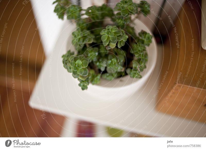 zimmerpflanze Pflanze Grünpflanze Topfpflanze Sukkulenten Blumentopf Regal ästhetisch schön Farbfoto Innenaufnahme Detailaufnahme Menschenleer Tag
