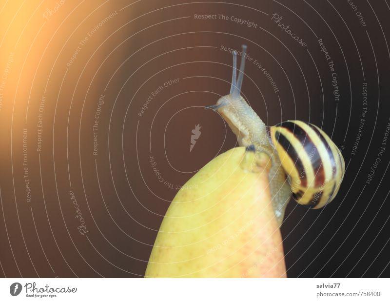 Gipfelstürmer Natur nackt Sommer ruhig Tier gelb Umwelt Wärme Frühling klein Gesundheit oben braun Horizont gold Frucht