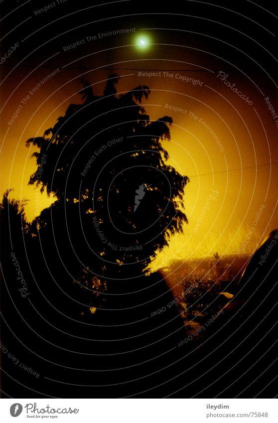 Nebel Nacht Baum Laterne mystisch dunkel gelb schwarz Kastenwagen Licht Beleuchtung Mond Aura PKW Sonne