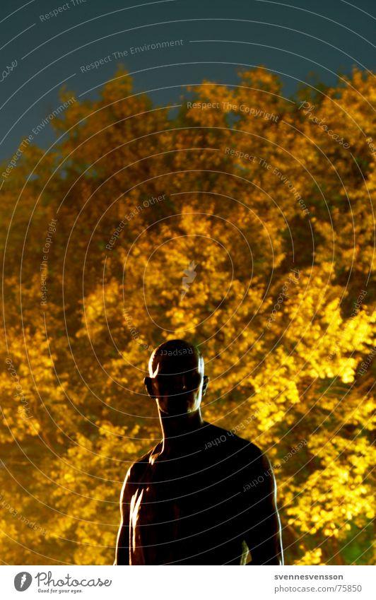 Ein Männlein steht im Walde ganz still und stumm... Skulptur Mann maskulin Licht Baum Blatt Herbst Museumsinsel Nacht Nachtaufnahme Berlin gold Silhouette