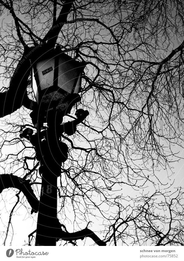 sonntag, später nachmittag laublos Baum Blatt Laterne schwarz ruhig Licht Herbst Sonntag Nachmittag Winter Holz Umwelt Himmel Natur Schwarzweißfoto Langeweile