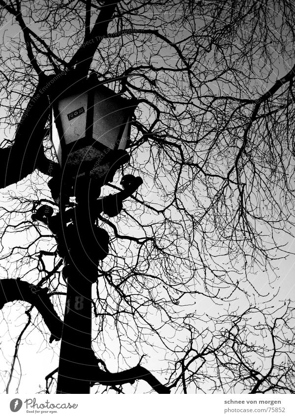 sonntag, später nachmittag Natur Himmel Baum Winter ruhig Blatt schwarz Herbst Holz hell Umwelt fallen Ast Laterne Langeweile Nachmittag