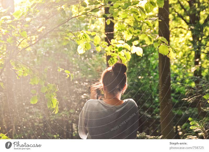 Im Zauberwald feminin Junge Frau Jugendliche Erwachsene 1 Mensch Natur Sommer Schönes Wetter Baum Sträucher Wald Dutt beobachten träumen natürlich grün Vorsicht