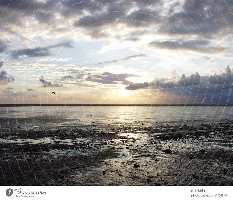 gleich ist sie weg ... Sonnenuntergang Meer Wolken rot Horizont Möwe Vogel Nordsee Wattenmeer Sand Himmel blau orange glänzend Wasser