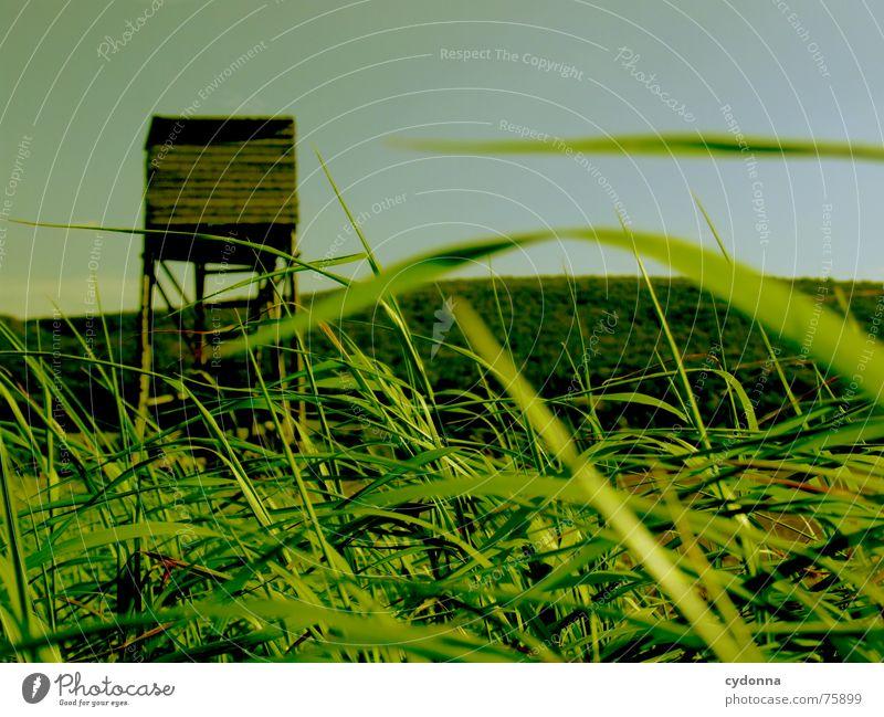 Auf zur Jagd! I Hochsitz Feld Gras Landwirtschaft Stimmung Vogelperspektive grün Sommer Ackerbau Berge u. Gebirge Landschaft Himmel Perspektive Wind wehen Erde