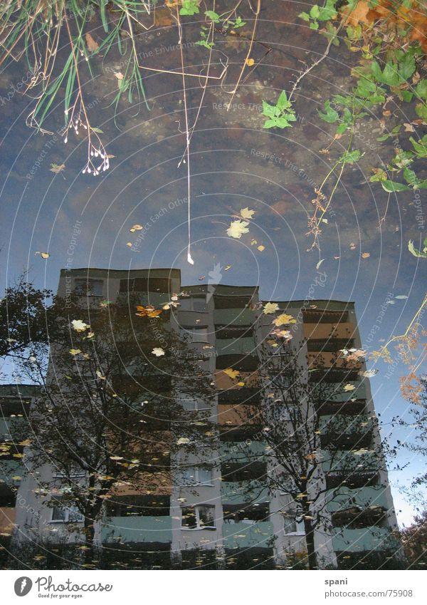 Wasserspiele Blume Haus Fluss Vergänglichkeit Spiegelbild Gewässer ungenau