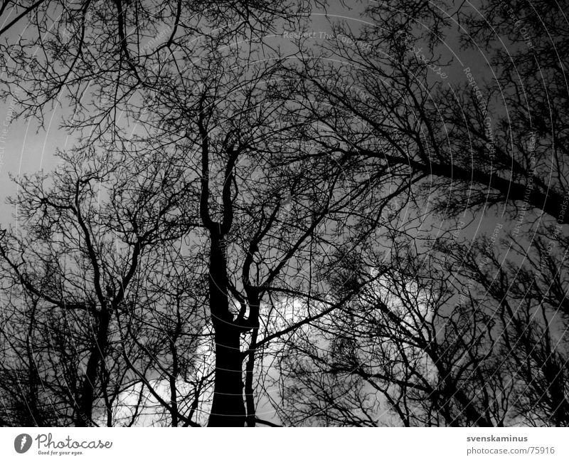 Baum Himmel schwarz Wolken Einsamkeit Ferne Wald dunkel kalt Baumstamm Baumkrone