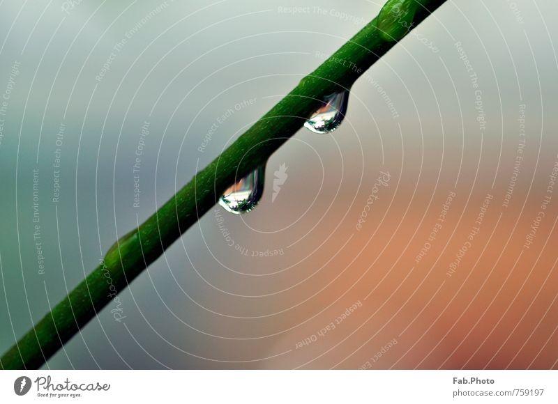 Regentropfen Natur grün Farbe Wasser Umwelt Wiese Frühling Glück Garten träumen orange Zufriedenheit Wachstum ästhetisch nass Wassertropfen