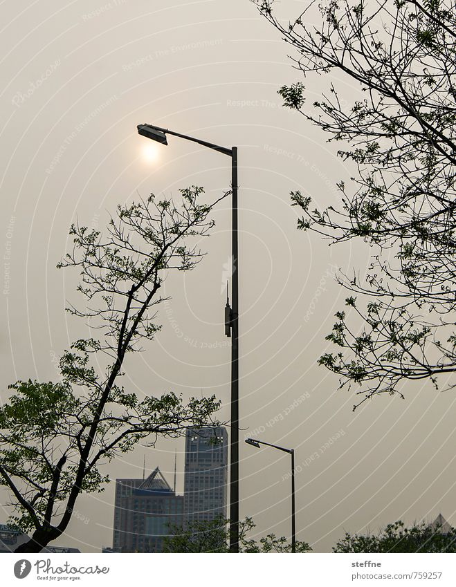 Straßenbeleuchtung Peking China Stadt Stadtleben Hochhaus überbevölkert Umweltverschmutzung Smog Stadtzentrum modern Laterne Baum Sonnenuntergang Abend