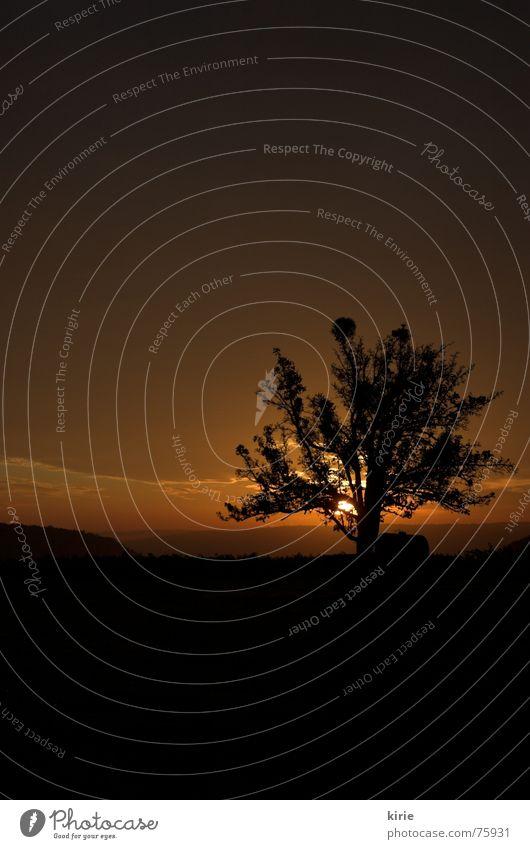 guten morgähn Baum Morgen Physik dunkel Sonnenaufgang Wiese feucht Nebel Weinberg Außenaufnahme Morgendämmerung Wärme Himmel Abenddämmerung