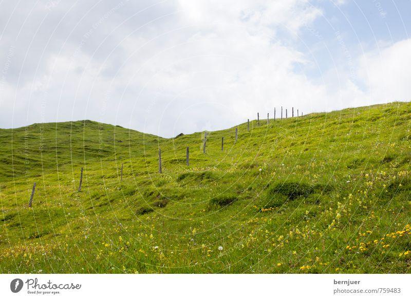 Heidis Wiese Landwirtschaft Forstwirtschaft Umwelt Natur Landschaft Pflanze Wolken Sommer Schönes Wetter Gras Nutzpflanze Alpen nachhaltig blau grün Bergwiese