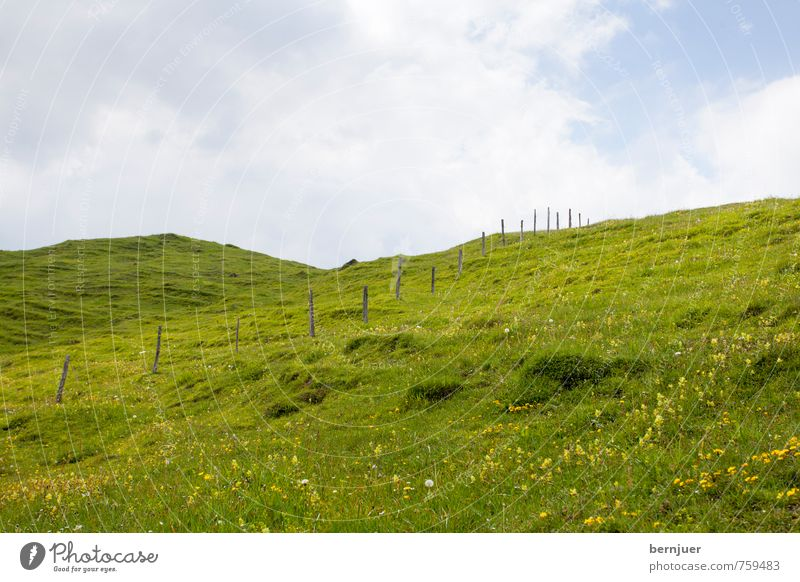 Heidis Wiese Natur blau grün Pflanze Sommer Landschaft Wolken Umwelt Gras Schönes Wetter Alpen Landwirtschaft Weide Zaun Grenze