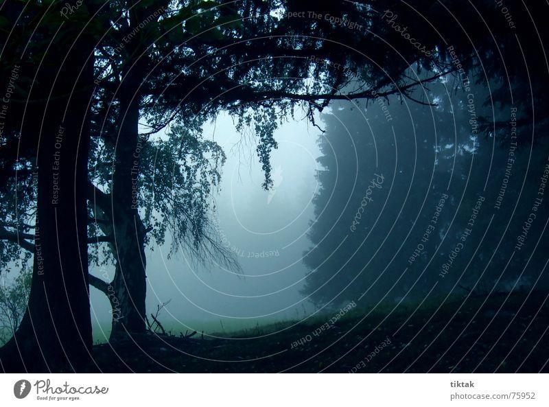 Hallo ist da jemand? Wald Waldlichtung Baum Fichte Tanne Birke ruhig unheimlich grauenvoll gruselig dunkel Nebel Herbst Abend Ast spukhaft