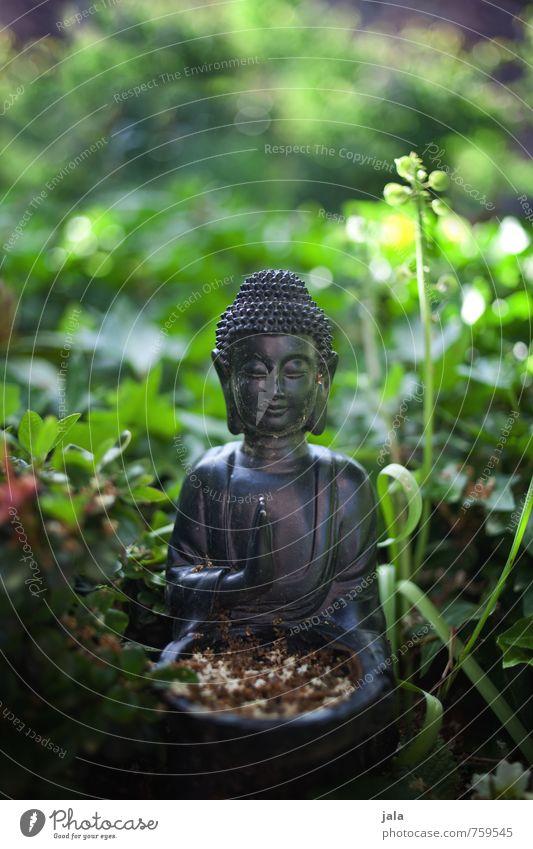 buddha Natur Pflanze Gras Religion & Glaube Garten Dekoration & Verzierung Sträucher ästhetisch Grünpflanze Buddha Buddha Statue