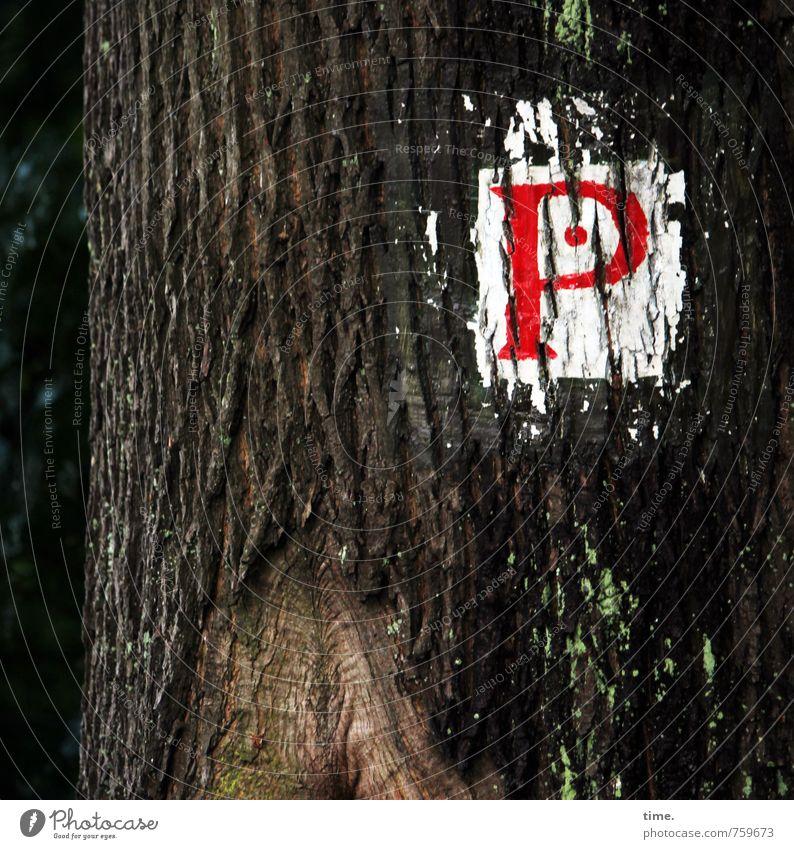 Parkplatz | selbstgemacht Umwelt Baum Verkehr Zeichen Schriftzeichen Schilder & Markierungen einzigartig Fürsorge Konzentration Ordnung Dienstleistungsgewerbe