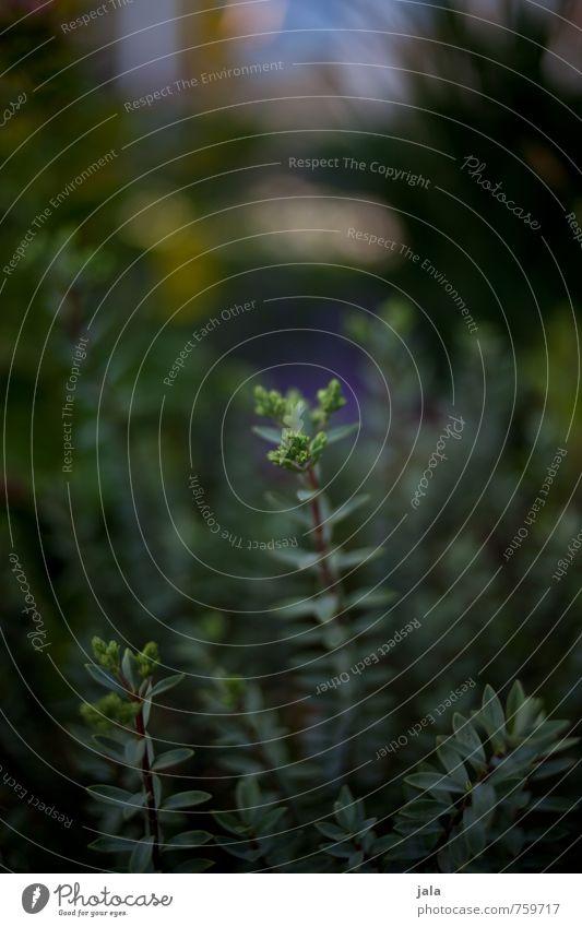 dunkelgrün Natur Pflanze Blatt natürlich Garten Grünpflanze