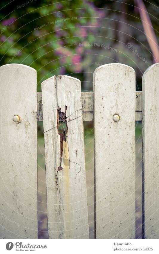 in die Jahre gekommen ... Natur alt Stadt grün weiß Pflanze Frühling Holz Garten Metall Park Häusliches Leben trist authentisch Schönes Wetter kaputt