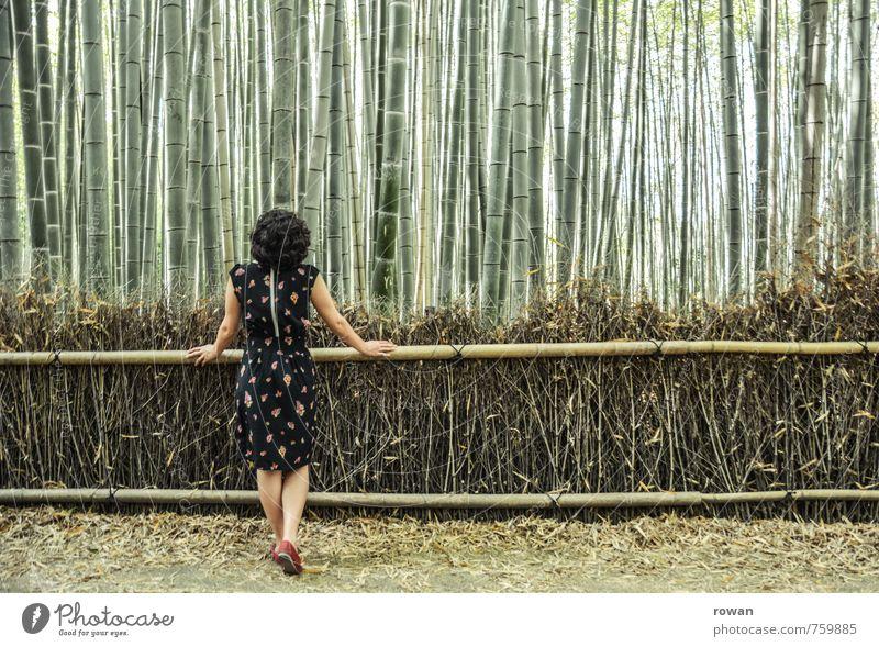 bambus Mensch feminin Junge Frau Jugendliche Erwachsene 1 Landschaft Pflanze Sträucher exotisch Bambus Bambuszaun Wald vertikal Linie Kleid Einsamkeit einzeln