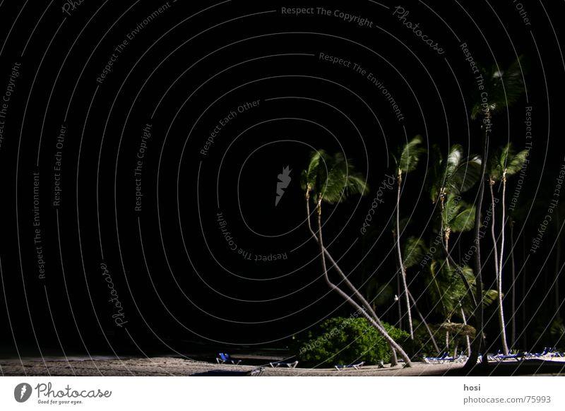 Am Strand 1 Palme Meer Liegestuhl Sonnenschirm Ferien & Urlaub & Reisen Licht Wellen Physik Nacht Wohlgefühl Pause Dominikanische Republik Punta Cana Sand