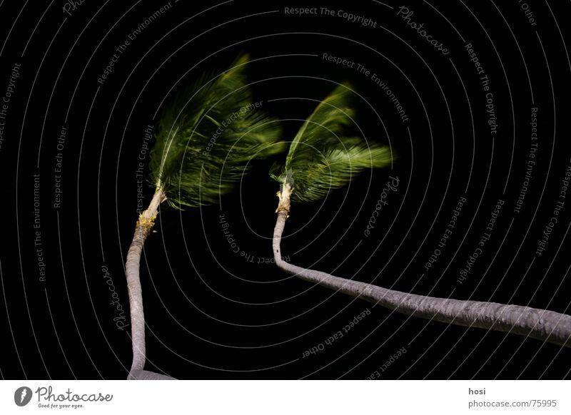 Am Strand 2 Ferien & Urlaub & Reisen Meer Erholung Wärme Sand Wind Pause Physik Baumstamm Palme Wohlgefühl Baumkrone Kuba Wurzel Geräusch