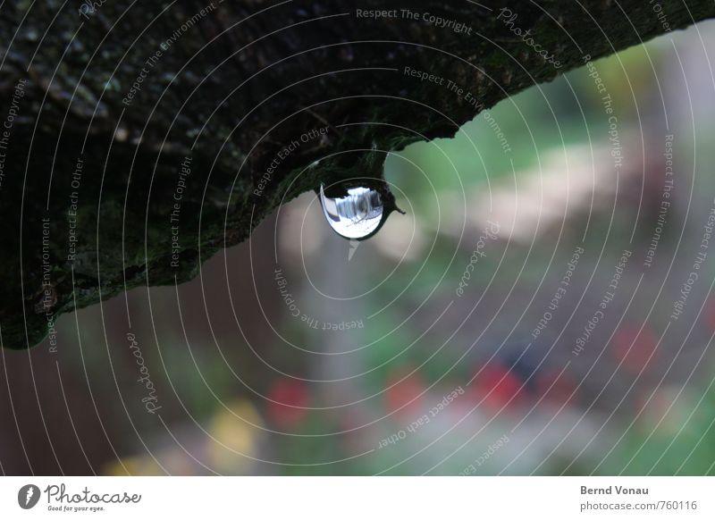 abhängen Wasser nass grau grün schwarz Wassertropfen Baum Baumrinde Regenwasser Garten Unschärfe Farbfoto Außenaufnahme Menschenleer Tag Licht