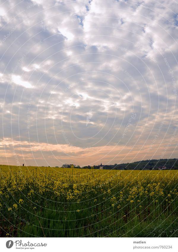 Kirchlein Umwelt Pflanze Himmel Wolken Horizont Sonnenaufgang Sonnenuntergang Frühling Wetter Schönes Wetter Baum Gras Nutzpflanze Wiese Feld Wald Menschenleer