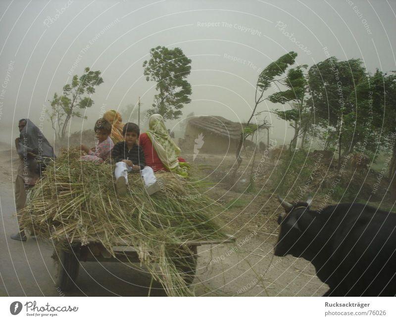 Sandsturm in Pakistan Ochsengespann Sturm Kind Punjab Wind
