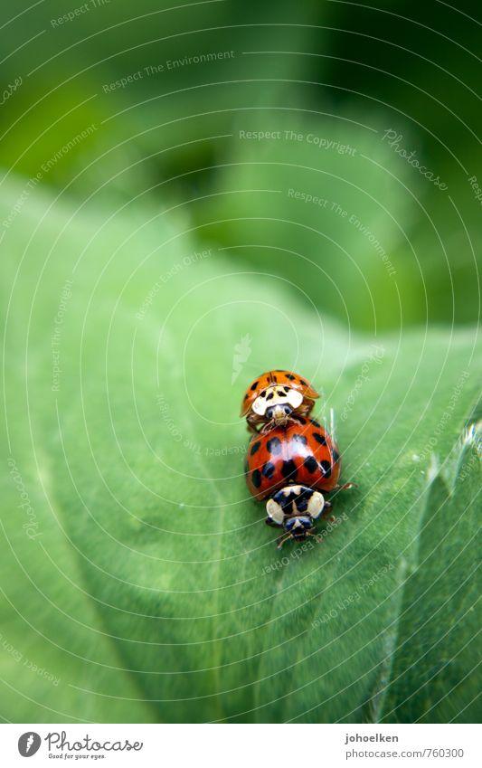 Doggy style? grün weiß Pflanze rot Blatt Tier Erotik Liebe klein natürlich Zusammensein orange glänzend wild Wildtier Sträucher