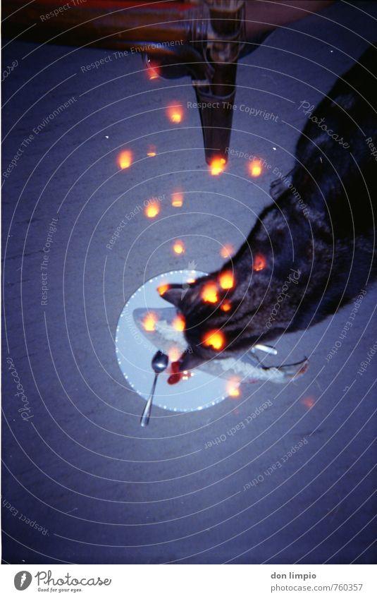 katze.geil Fisch Katze Fressen glänzend hocken leuchten nah retro trashig Mittelpunkt analog Blitze Teller Stuhl PVC Farbfoto Innenaufnahme Experiment