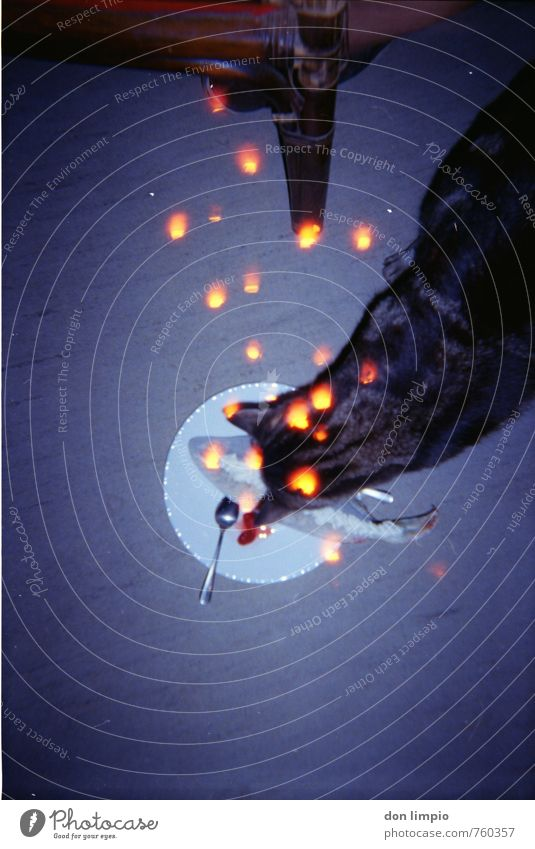 katze.geil Katze glänzend leuchten retro Fisch Stuhl nah Blitze trashig Fressen Teller analog hocken Mittelpunkt PVC