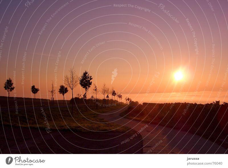 herbstnebel Herbst Nebel Sonnenaufgang Baum ruhig Allee Feld Straße Landschaft Niveau Berge u. Gebirge Beleuchtung Wege & Pfade