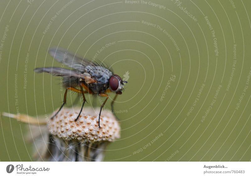 Abflugbereit... Fliege 1 Tier fliegen warten nah stachelig grau grün achtsam Wachsamkeit Makroaufnahme